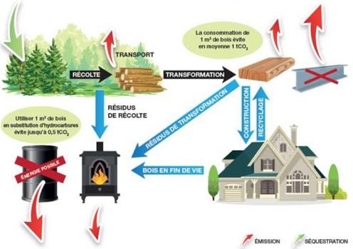 L'aménagement forestier, vecteur de lutte contre les changements climatiques