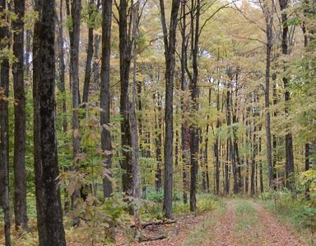 La forêt estrienne: la connaître pour la préserver