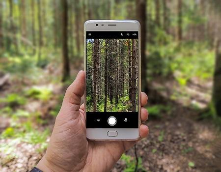 Comment les petites forêts privées peuvent sauver la planète